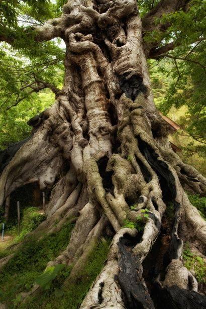 De belles images de la forêt de Brocéliande 11210410