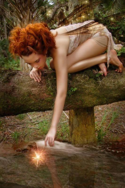 De belles images de la forêt de Brocéliande 11709510