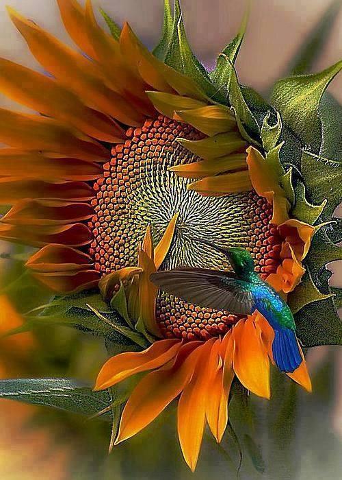 Des oiseaux et de la couleur 11900010