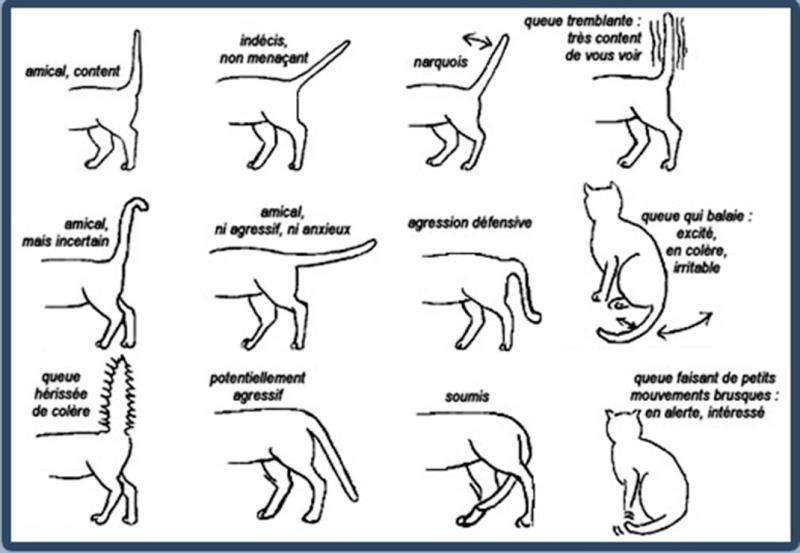 Apprenez à mieux communiquer avec les chats en décodant tous leurs comportements Chat-m10