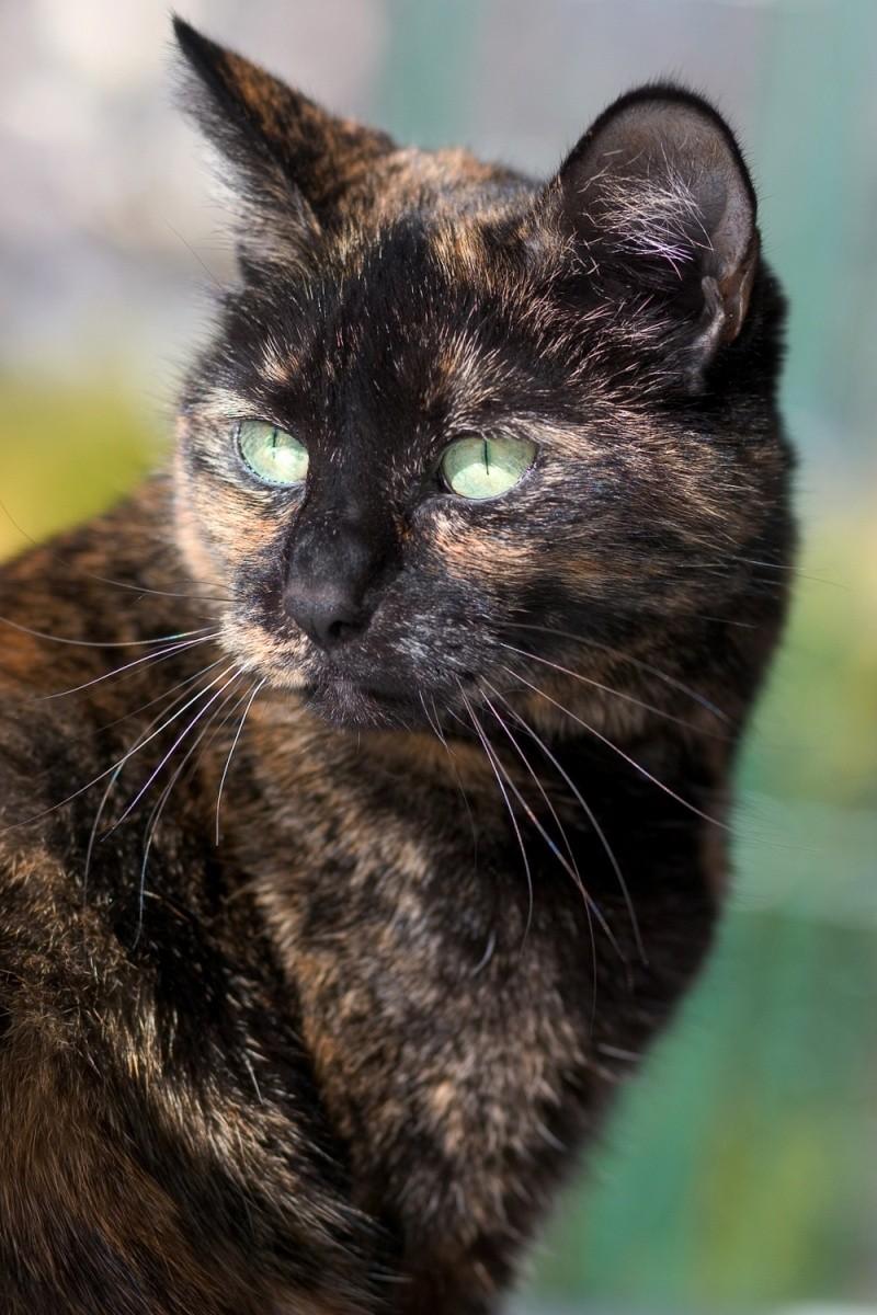 Cait's Kitty Profiles Talon14