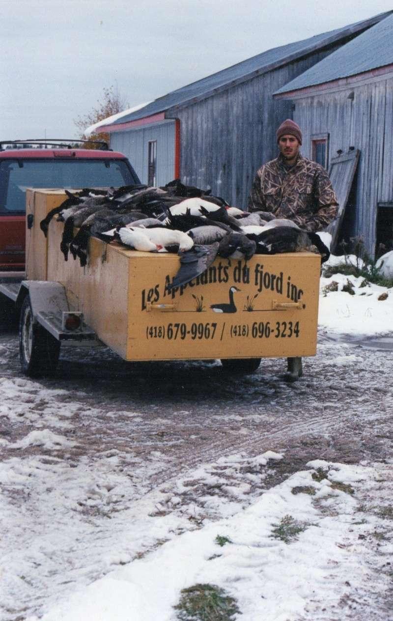 Les oies cendrées nuisibles en Norvège Chasse10