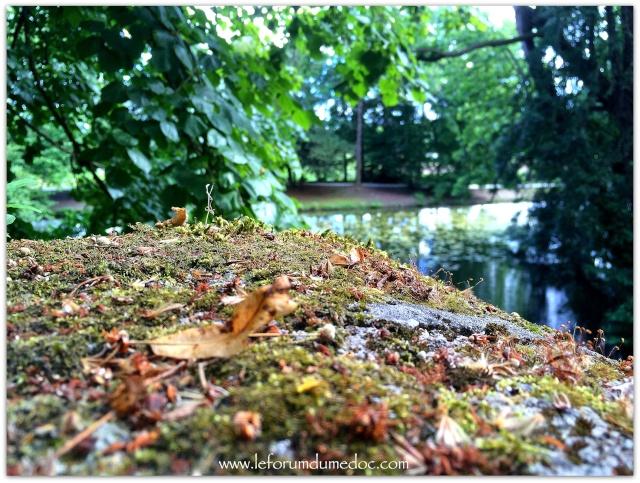 Parc de Majolan à Blanquefort vu par Forum du Médoc Img_6713