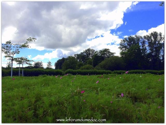 Parc de Majolan à Blanquefort vu par Forum du Médoc Img_6716