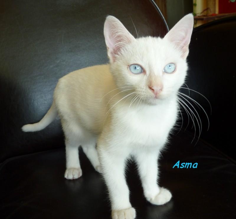 ASMA  P1060810