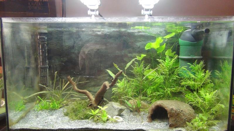 Aquarium 54 litres amazonien Dsc06410