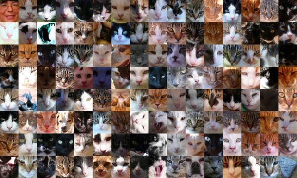 Les chats de Syros... 10703510