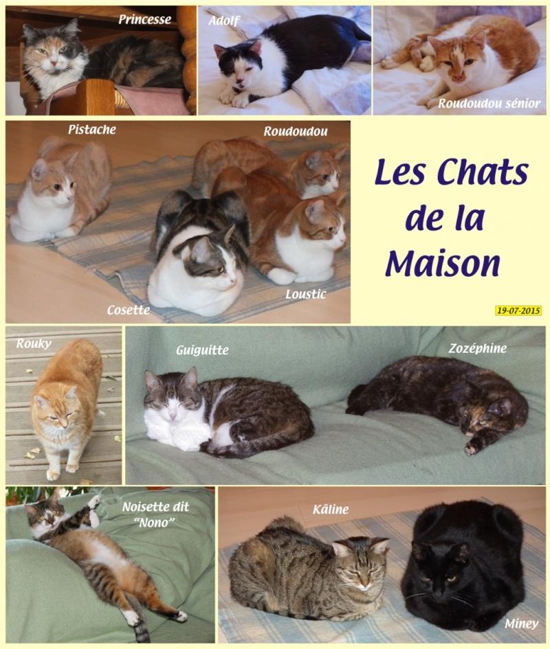 Les chats de la maison... Nouvea21