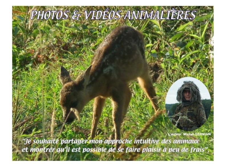 Vidéos animalières... Nouvea33