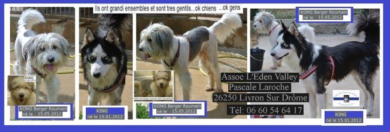 Laurel et hardy  Husky sibérien poil long, ok congénères pas de chats(m) ASSO ROUMANIE    - Page 2 Aa11