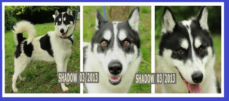 SHADOW Husky (m) noir et blanx 03/2013 REFU78 Sha10