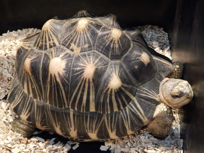 Arras 2015, plus de tortues que de visiteurs (ou presque)  Dscn3417