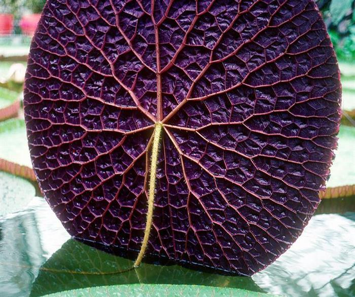 صور نباتات رائعه  0bb22410