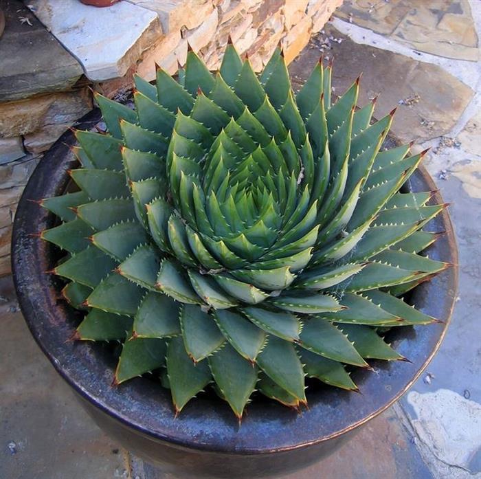 صور نباتات رائعه  8798a810
