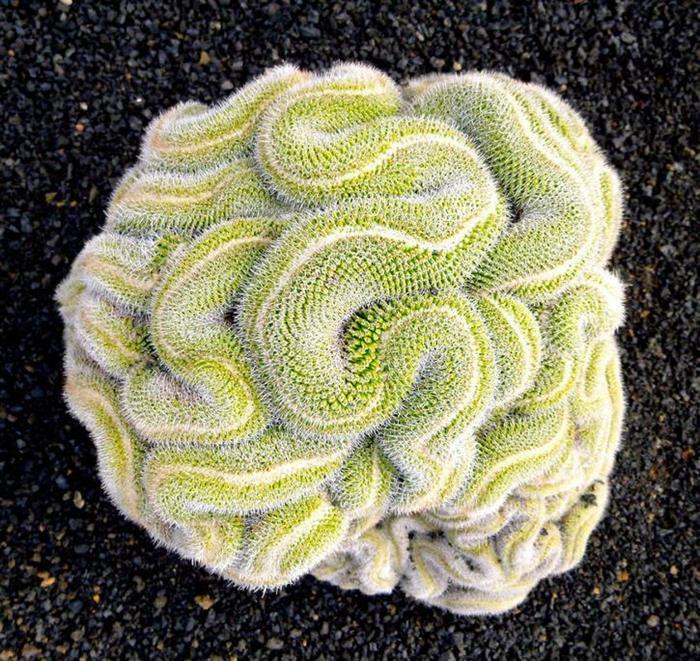 صور نباتات رائعه  Ef72bb10