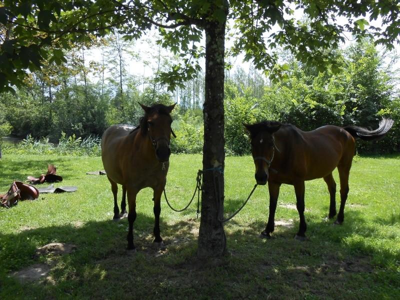 Cherche compagnons de balades sur Corbelin/Granieu/Chimilin - Page 5 Dscn1524
