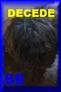 - FOURRIERE DE BACKA : NOUS DEVONS SAUVER LES CHIENS! 1 - Page 40 69dcd10