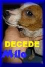 - FOURRIERE DE BACKA : NOUS DEVONS SAUVER LES CHIENS! 1 - Page 40 Milo_d10