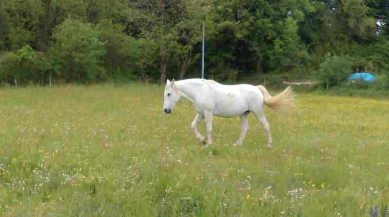 (Dept 07) PALOMA, Onc Selle, Sauvée par Loulou (Mai 2014) décédé - Page 2 Imag0710