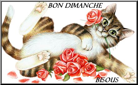 Le Thread du BONJOUR/BONSOIR  les Zanimo's  - Page 32 3s00rx10