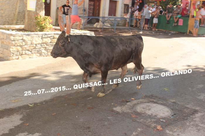 25...07..2015... QUISSAC...Manade  LES  OLIVIERS Img_0064