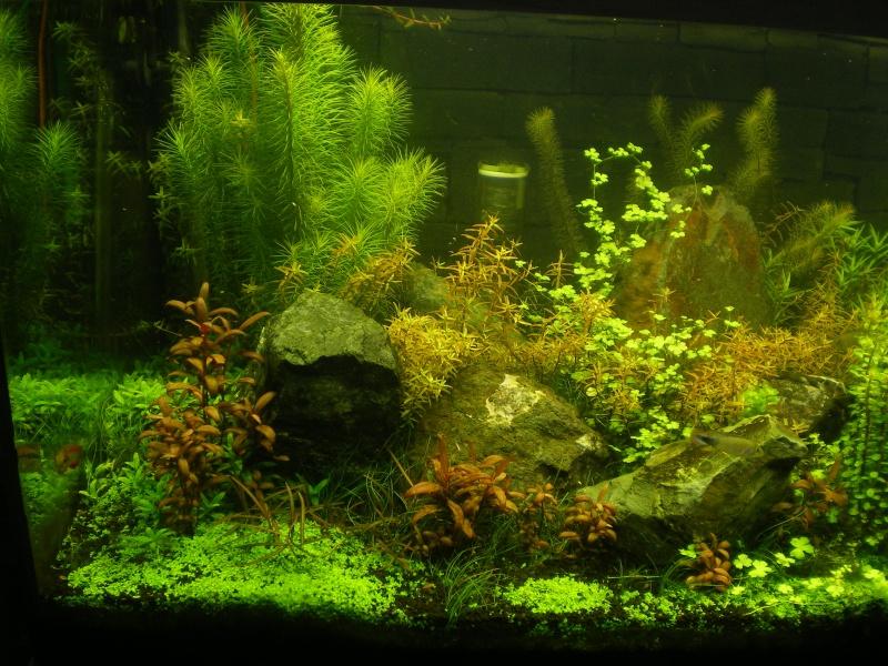 Réfection de mon aquarium  Imgp0110