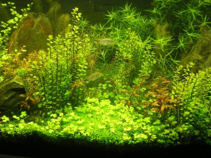 Réfection de mon aquarium  Imgp0111