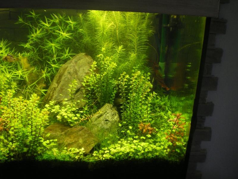 Réfection de mon aquarium  Imgp0112