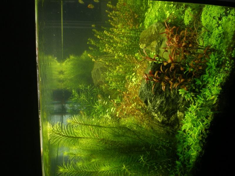 Réfection de mon aquarium  Imgp0118