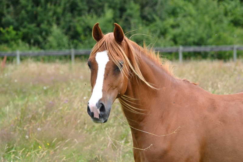 Heldon, PSAR ataxique, un cheval que l'on vouvoie Dsc_0211