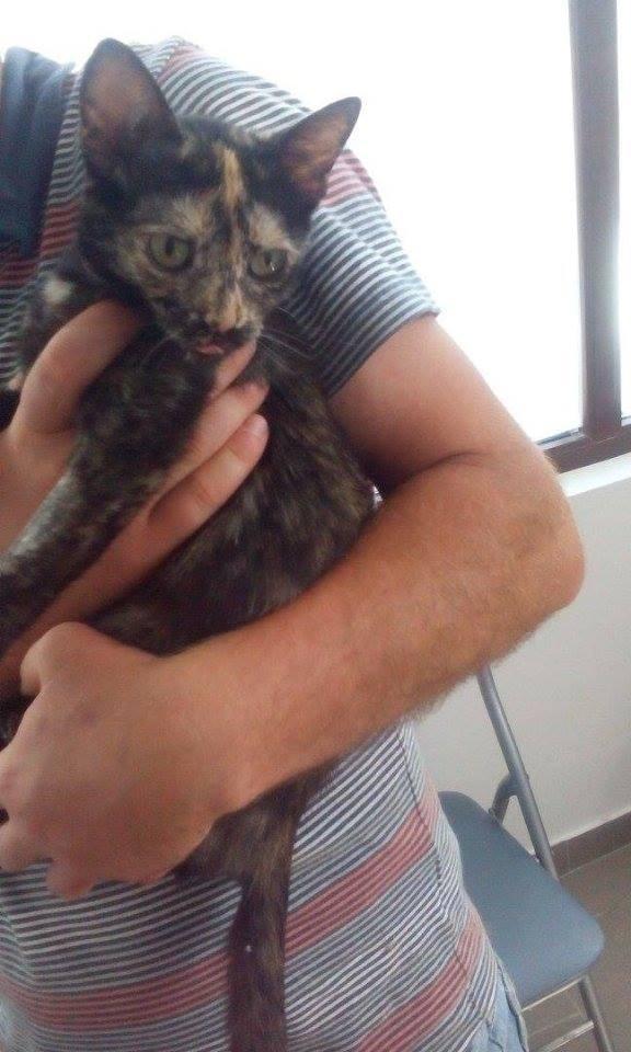 MYSTIQUE (ex-ONDINE) - chatte femelle, née 2014 - (PASCANI) - adoptée par Emilie B. (dpt 69) 11414510