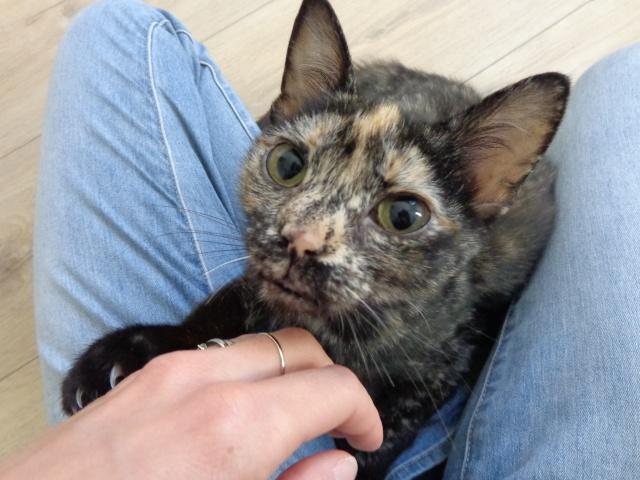 MYSTIQUE (ex-ONDINE) - chatte femelle, née 2014 - (PASCANI) - adoptée par Emilie B. (dpt 69) Dsc02112
