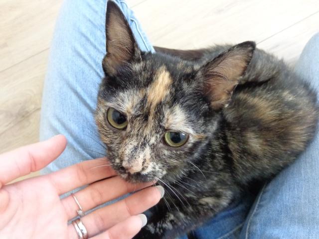 MYSTIQUE (ex-ONDINE) - chatte femelle, née 2014 - (PASCANI) - adoptée par Emilie B. (dpt 69) Dsc02114