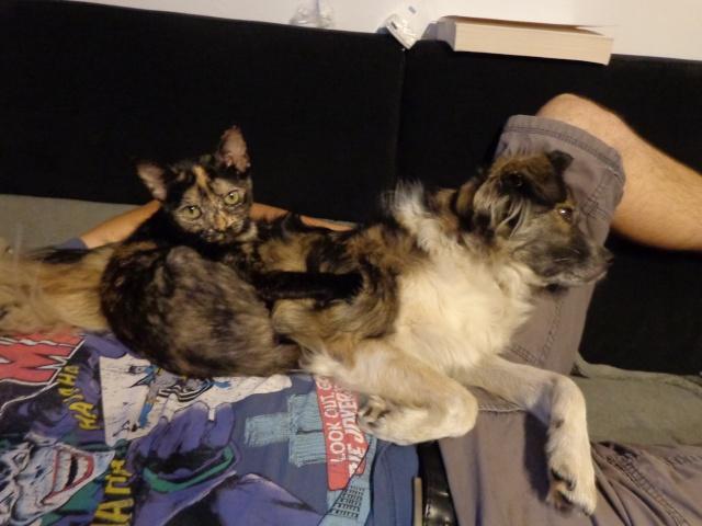 MYSTIQUE (ex-ONDINE) - chatte femelle, née 2014 - (PASCANI) - adoptée par Emilie B. (dpt 69) - Page 3 Dsc02410