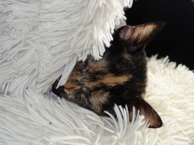 MYSTIQUE (ex-ONDINE) - chatte femelle, née 2014 - (PASCANI) - adoptée par Emilie B. (dpt 69) - Page 4 Dsc02916