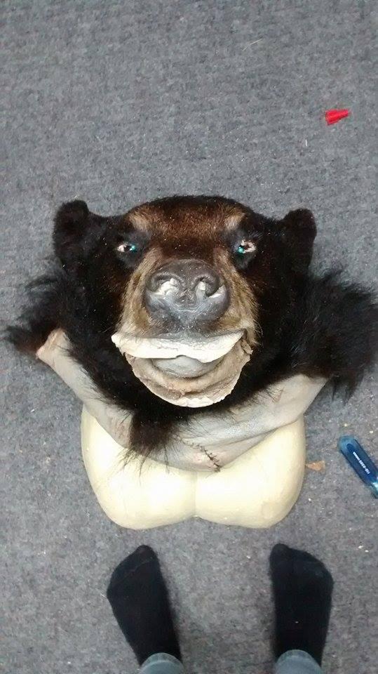 Réalisation de mon ours 2013 11180210