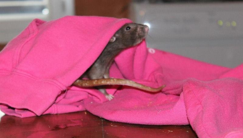 Les rats de Skip' Cutesh11