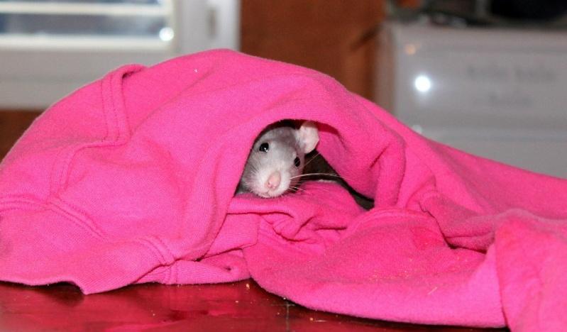 Les rats de Skip' Cutezo10
