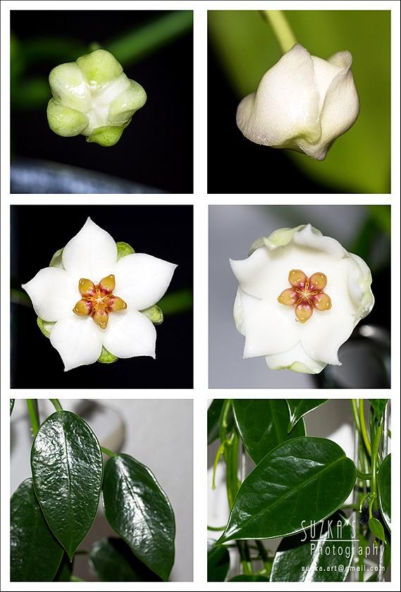 Sunnies Hoyabilder - Seite 24 Thaila10