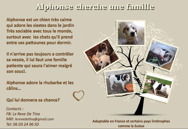 Alphonse ou comment devenir un Tinou malgré soi  - Page 6 Alphon10