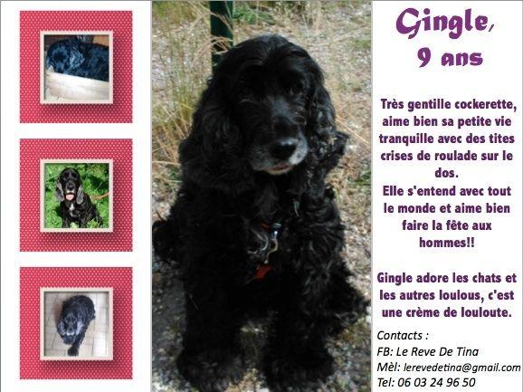 GINGLE, gentille cocker noire de 9 ans - Page 15 Gingle10