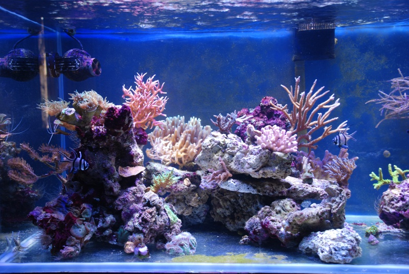 mon reef - Page 4 Dsc_0113