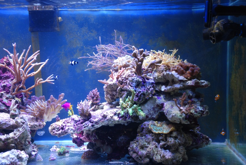mon reef - Page 4 Dsc_0114