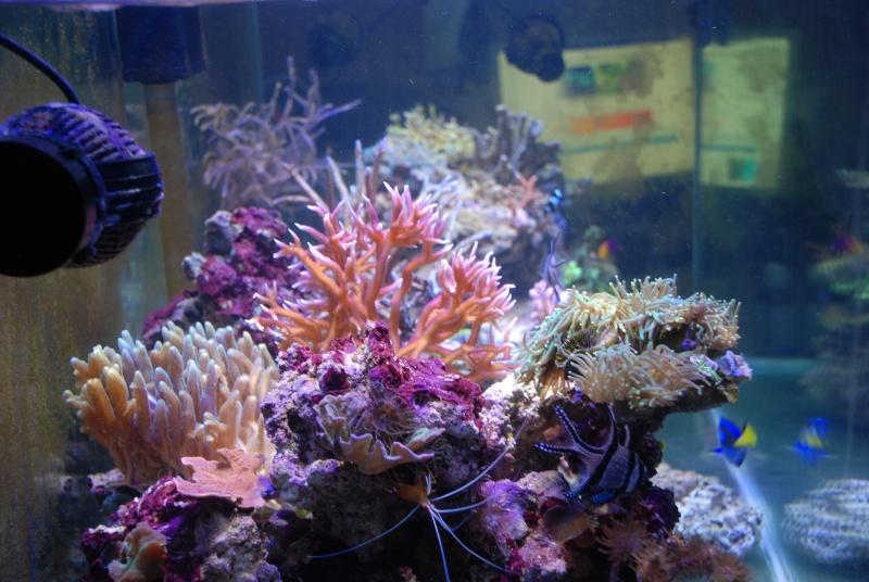 mon reef - Page 4 Dsc_0115