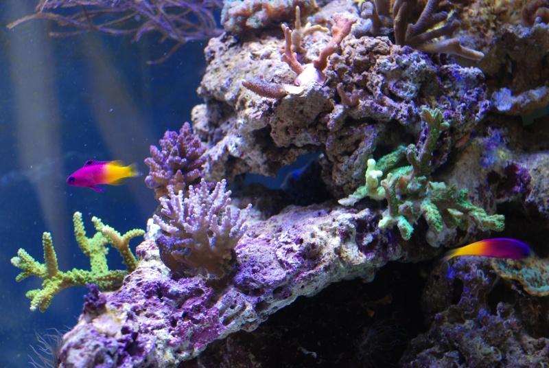 mon reef - Page 3 Dsc_0213