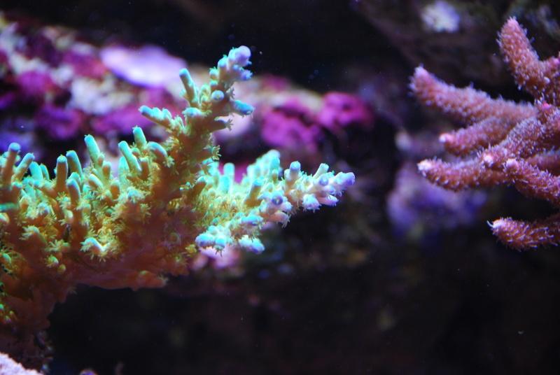 mon reef - Page 5 Dsc_0224