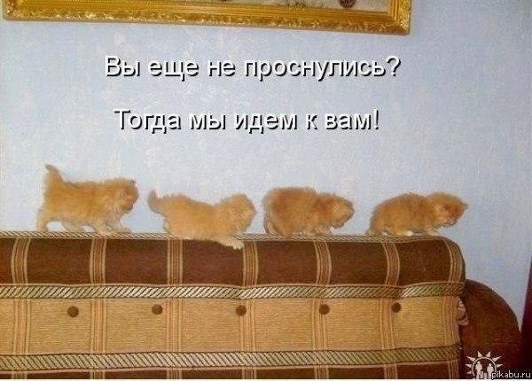 Доброе утро,день,вечер:)))))))) - Страница 7 85623710