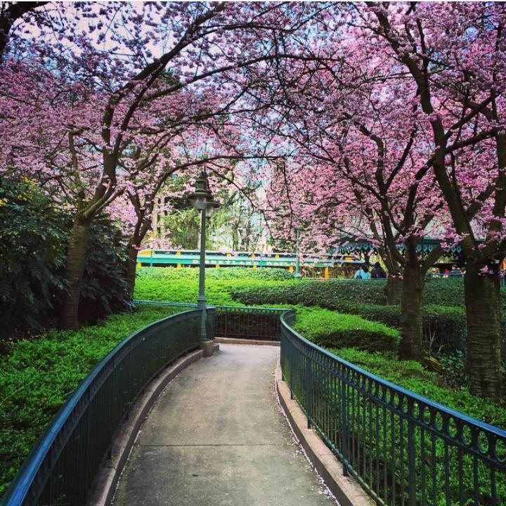 Instagram OFFICIEL Disneyland Forum Club 11304110