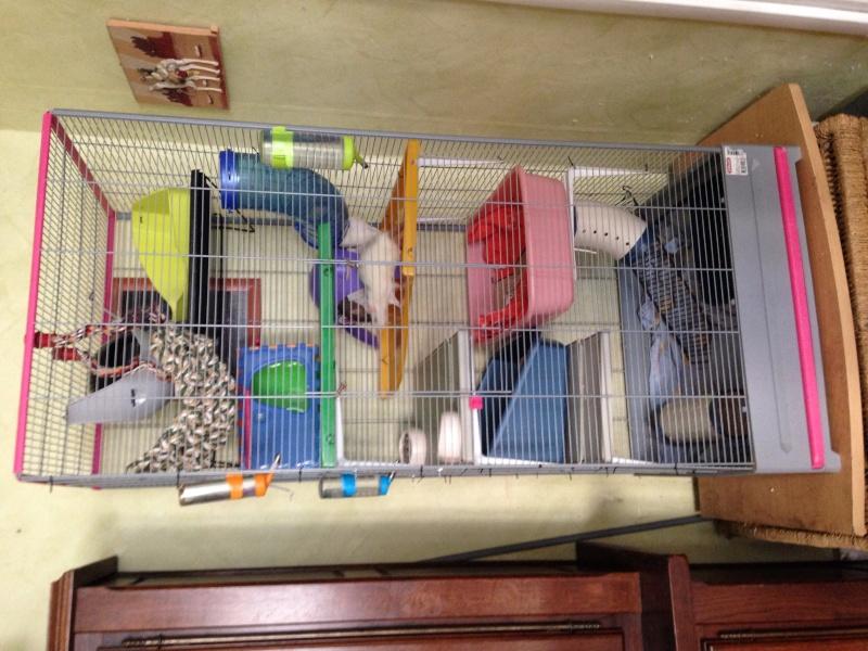 La cage de mes pepettes <3  - Page 3 Image10