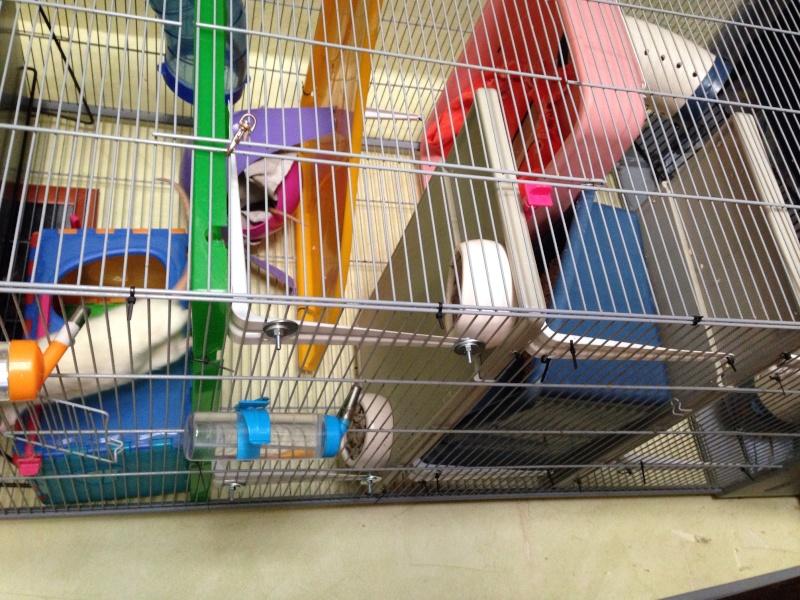 La cage de mes pepettes <3  - Page 3 Image11